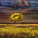 Tree in the Sun in the Rain thumbnail