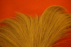 The Bright Mohawk (ananemsis) Tags: northernthailand mohawk broom mohawkbroom thaibroom redbackground chiangmaithailand chiangmai thailand southeastasia thebrightmohawk