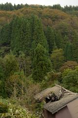 broken roof (Andi [アンデイ]) Tags: kurumidani japan kyoto kyotango mountain village rural ruraljapan nature people forest tea greentea macha food photography