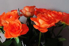 DSC_6690 (PeaTJay) Tags: nikond300s sigma reading lowerearley berkshire macro micro closeups gardens indoors nature flora fauna plants flowers bouquet rose roses rosebuds