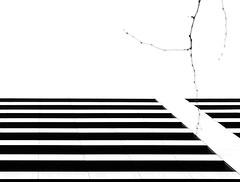 Broken geometry (aleadam) Tags: line geometry architecture monochrome aligned broken twig tree sky homogeneous 7dwf blackandwhite black white