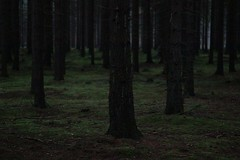 9991 (karel.seidl) Tags: forest woods evening dark moss trunk outdoor nature moody spooky creepy