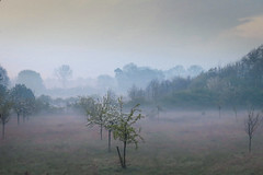 Orchard Meadow #57 (ursulamller900) Tags: orchardmeadow obstbaumwiese morning morgenlicht spring springtime fog nebel