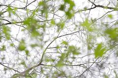 Spring 1 (++andrea++) Tags: frühling spring baum bäume unscharf