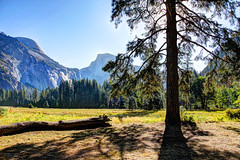 By The Meadow In The Morning (Robert F. Carter Travels) Tags: meadow meadows yosemite trees yosemitevalley yosemitenationalpark cooksmeadow landscape landscapes morning sunlight log logs granite