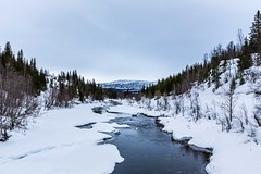Plurdalen (Einar Schioth) Tags: plurdalen river rocks trees tree winter water sky snow day canon clouds cloud coast shore nationalgeographic ngc norway norge nature nordland landscape photo picture outdoor ice europe einarschioth