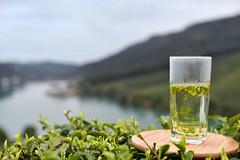 a cup of fresh Longjing (angelchentea) Tags: tea teavivre greentea 2017 fresh