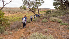 COP burra district field trip - red banks cp - apr 2017 - 4220876 (COPbiodiversity) Tags: pglc activities activity adelaidemetropolitan arid australia australian autumnfieldtrip baldinacreek billdoyle burra care cityofplayford community communitygroup cop council fieldtrip greening group hike hiking land landcare mallee midnorth mountloftyranges north northern playford playfordgreening playfordgreeningandlandcare pool redbanks redbanksconservationpark redbankscp reserve sa semiarid shrubland southaustralia southaustralian trail volunteer volunteering walker walkingtrail