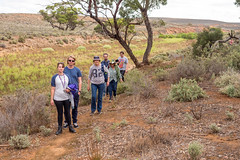 COP burra district field trip - red banks cp - apr 2017 - 4220881 (COPbiodiversity) Tags: pglc activities activity adelaidemetropolitan arid australia australian autumnfieldtrip baldinacreek billdoyle burra care cityofplayford community communitygroup cop council fieldtrip greening group hike hiking land landcare mallee midnorth mountloftyranges north northern playford playfordgreening playfordgreeningandlandcare pool redbanks redbanksconservationpark redbankscp reserve sa semiarid shrubland southaustralia southaustralian trail volunteer volunteering walker walkingtrail