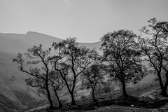 QDBB-1-6 (Michael Yule - I Can See For Miles) Tags: nikon d7100 landscapemountains brecon wales great britain hiking walking breconbeacons april blackandwhite trees penyfan cwmgwdi walk