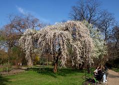 Wrocław - Ogród Botaniczny (tomek034 (Thank you for the 1 300 000 visits)) Tags: polska wrocław wroclovek ogródbotaniczny wiosna