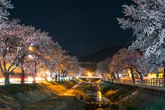 nightscape 밤풍경 (purunuri) Tags: nightshot landscape mungyung sight spring stroll springstroll korea tour cherryblossom 벚꽃 문경 풍경