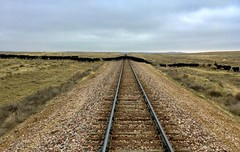"""Down the Line"" (It Feels Like Rain) Tags: downtheline westtexas railroadtracks railway railroad cows cattle cattlecrossing horizons therealthing"