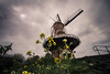 standing tall (bjdewagenaar) Tags: windmill building architecture architecturephotography lowangle wideangle lowperspective perspective sigma 1020mm 10mm sony sonya58 gorinchem gorcum holland dutch clouds sky flowers raw lightroom adobelightroom photoshop