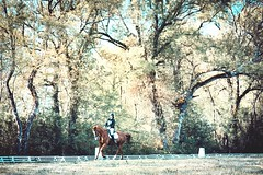 Circles (M a n o n C m m r s) Tags: dressage horse riding competition concours cce equitation