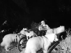 Darkenss On The Trail