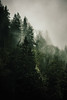 The Dark Forest (Danielle Bednarczyk) Tags: camping trees camp mist mountain tree green nature beautiful fog pine forest dark outdoors washington moss woods nw pacific hiking smoke peaceful calm hike wanderlust adventure explore evergreen zen pacificnorthwest wa mystical dreamy smoky mossy