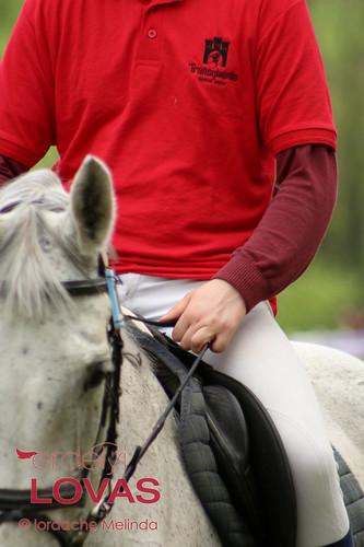 """Transylvania Horse Show 2014 - Díjugratók • <a style=""""font-size:0.8em;"""" href=""""http://www.flickr.com/photos/95148802@N02/13918322767/"""" target=""""_blank"""">View on Flickr</a>"""