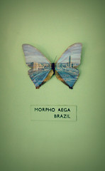 morpho aega, brazil (alicehopedenny) Tags: city colour building london museum work butterfly bug insect photography cityscape image pastel images double exam horniman within exposures alevel