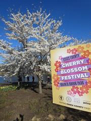 Essex County Cherry Blossom Festival Branch Book Park, in Newark, New Jersey USA (RYANISLAND) Tags: park new pink flowers trees flower tree japan cherry outdoors japanese newjersey spring cherries blossom essexcounty blossoms nj jersey cherryblossom cherryblossoms newark essex springtime citypark yoshino cherrys floweringtree floweringtrees cherryblossomfestival colorpink newarknewjersey newarknj pinkcolor