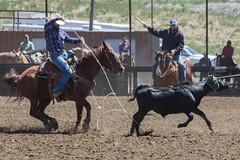 Heeling (Eastbaygirl925) Tags: cowboys equine steers roping teamroping equinesports maxwellcrew bassosarena eastbaygirl