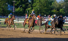 2014 Preakness Stakes (104) (maskirovka77) Tags: gate maryland preakness colt stallion stakes racehorse thoroughbred pimlico 2014 californiachrome