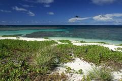 Laysan Island Beach