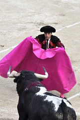 Corrida Als - 1/6/2014 (sudfrance30) Tags: corrida toro gard arne languedocroussillon matador rafaelillo taureau als cvennes tauromachie salvadorvega albertolamelas alsagglomration