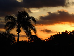 Sunrise May 16, 2014 (Jim Mullhaupt) Tags: morning blue red wallpaper orange color tree silhouette yellow night clouds sunrise landscape dawn flickr florida palm tropical bradenton mullhaupt jimmullhaupt
