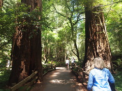 (Clay Henson) Tags: san francisco muirwoods marincounty redwood redwoods