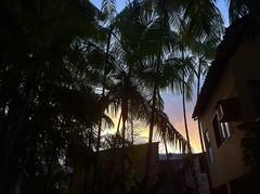 """Coucher de soleil entre les palmiers • <a style=""""font-size:0.8em;"""" href=""""http://www.flickr.com/photos/113766675@N07/14424681095/"""" target=""""_blank"""">View on Flickr</a>"""