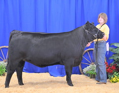 "Res Champion Bred/Owned & 5th Overall Simmental Regionals '11 2011 Menard Co Fair Grand Champion Heifer 4H, Champion Simmental • <a style=""font-size:0.8em;"" href=""http://www.flickr.com/photos/25423792@N05/14437270342/"" target=""_blank"">View on Flickr</a>"