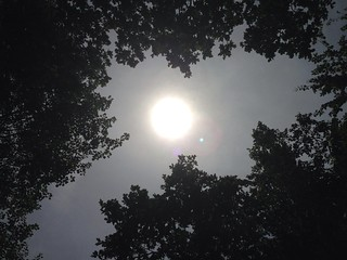 A summer walk in Abbotts Wood