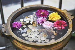 Coins and flowers. (Miss ZhaZha) Tags: flower colour reflection water horizontal closeup hope gold pond coin underwater multicoloured nopeople business luck copper abundance currency wishing wishingwell singleflower lightattheendofthetunnel currencysymbol donationbox fivecentcoin tencentcoin