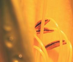 (Martin Sukup photography) Tags: flowers light flower macro nature up closeup wow photography photo nice flickr republic colours foto close martin czech photos d awesome tube tubes best explore 100 extension lovely makro hc 60 strobe splendid republika kytky esk hc100 60d sukup aputure