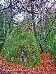 2012, novembre -4- fort d'Huelgoat (LOUIS TOSSER) Tags: france bretagne fort rochers finistre huelgoat