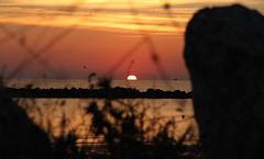 alba tra scogli rocce ed'erba - Cesano di Senigallia (walterino1962 / sempre nomadi) Tags: nuvole mare ombre boa erba luci sole rocce riflessi gabbiano ancona scogli peschereccio cesanodisenigallia
