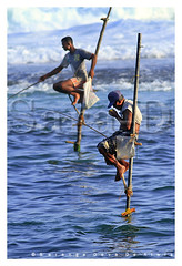 Life on the Pole (Sara-D) Tags: canon fishing sl srilanka lk southcoast galle southasia sarad polefishing serendib saranga stiltfishing srilankafishing sarangadevadealwis sarangadeva