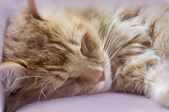 dreaming (demerson2(allmystorieshavehappyendings)) Tags: cats macro cat canon is 100mm 28 usm macros 6d f28l ef100mm canon6d