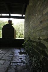 De la nada surge (Loree R.) Tags: musgo canon dark hide canonrebel oscuridad moist enredadera escondite humedad canoneosdigitalrebelxti