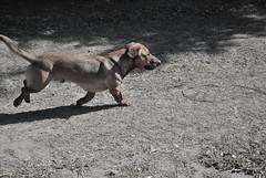 Tukita (luciiaamado) Tags: dog puppy tuka