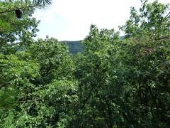 Zaleski Backpack Trail (tlucal) Tags: cliff nature hiking trail stateforest zaleski