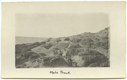 Mule track [Gallipoli]