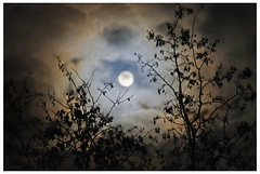 Lunar V (::YS::) Tags: yann savalle yannsavalle yasa moon lune lunar night clouds nuages ambiance clair obscur clairobscur nuit ciel sky haze halo red redhalo