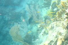 50. John Pennekamp coral reef (Misty Garrick) Tags: johnpennekamp johnpennekampreef johnpennekampcoralreefstatepark coralreef florida keylargofl keylargo floridakeys atlanticocean