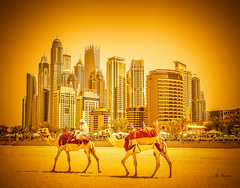 IMG_56552 copy (Gholam ali) Tags: dubai cityscape skyscaper downtown architecture hot camels contrast origin ride change adaptation sand fromthebeach jomeyra development civilization arab