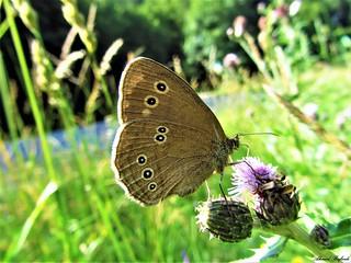 Butterfly 1194