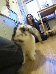 IMG_4717 (grindove) Tags: edvin kanin djur