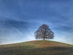 Der einsame Baum (Blende2,8) Tags: diebronnweilerfriedenslinde friedenslinde badenwürttemberg reutlingen himmel wiese baum linde