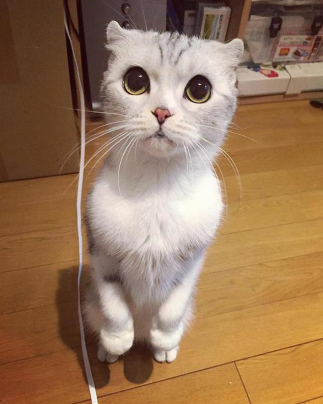 Bấn loạn với chú mèo đáng yêu có đôi mắt long lanh như đeo lens - Ảnh 13.